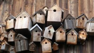 bird-feeder-248946_1280
